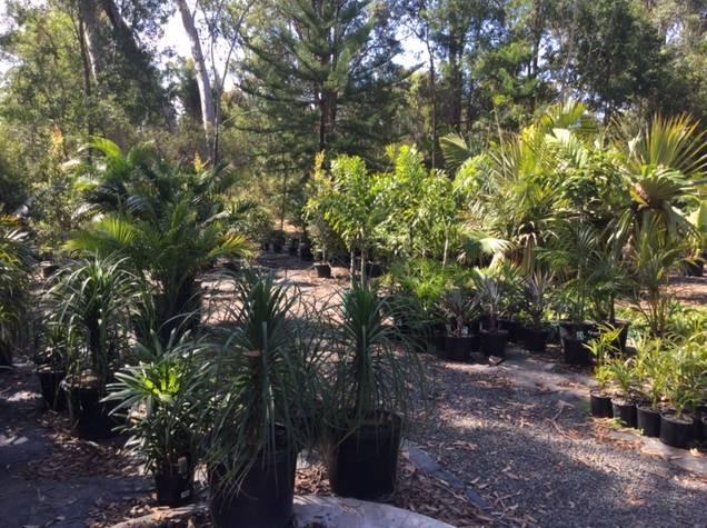 Noosaville Garden Centre Cooroibah Park Landscapes