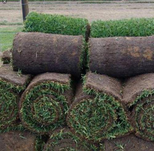 U-Bute Turf Farm