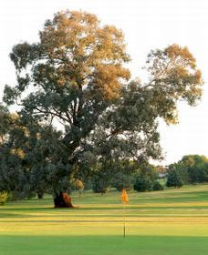 Cowra Golf Club Logo and Images