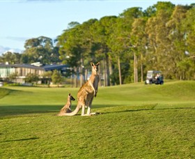 Sanctuary Cove Golf and Country Club Logo and Images