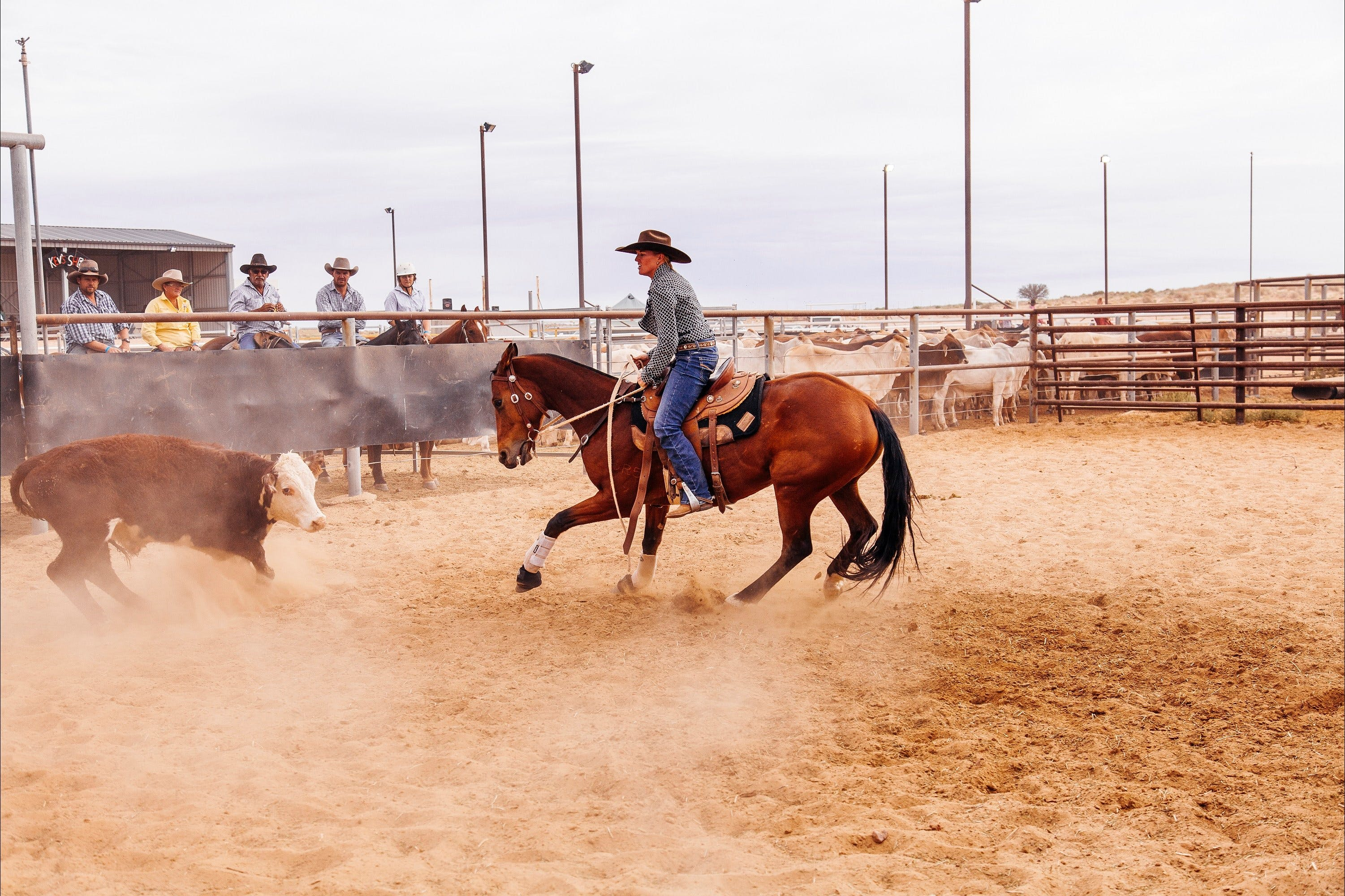 Birdsville Campdraft,  Rodeo and Bronco Branding Logo and Images