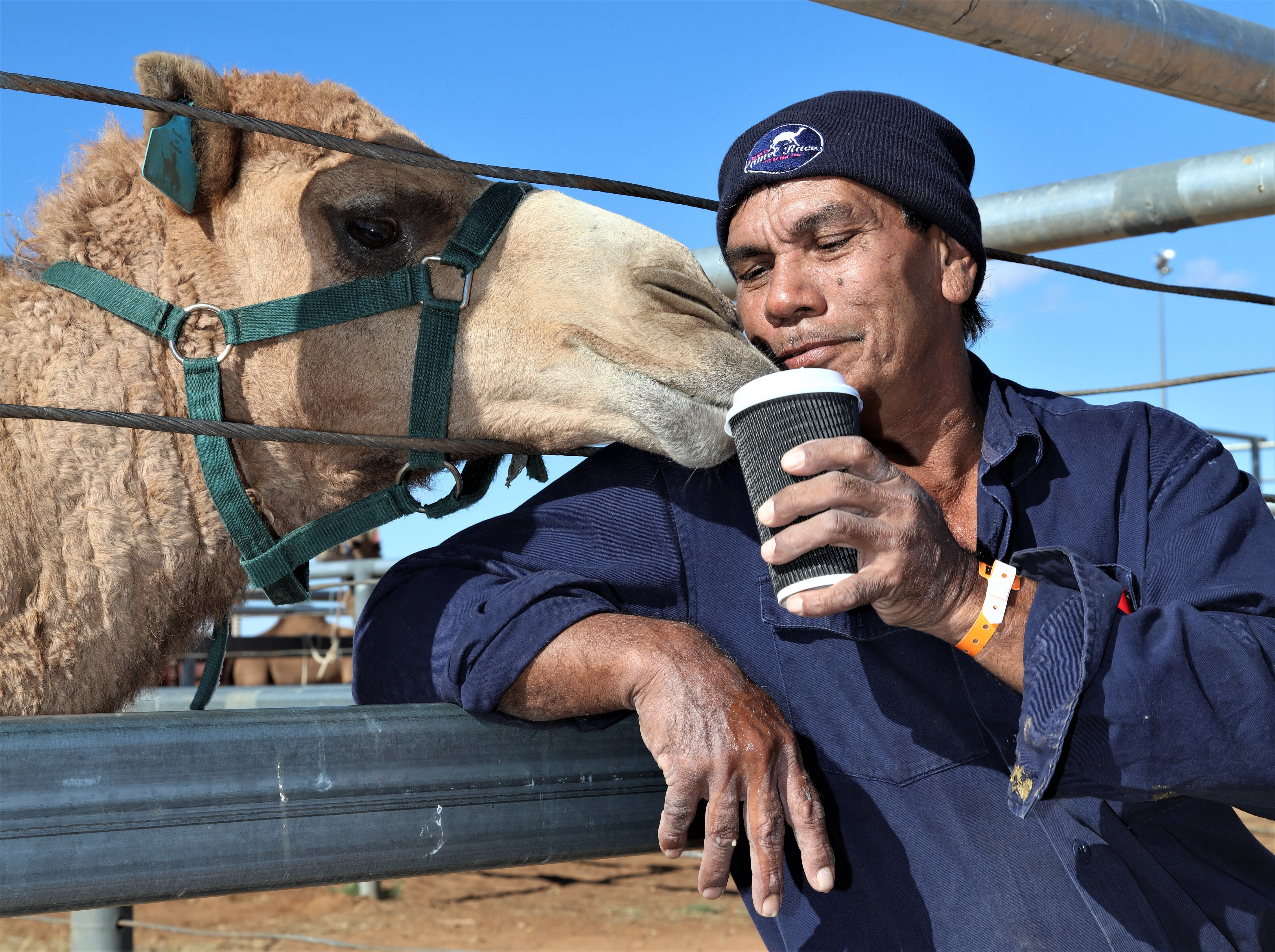 Boulia Camel Races Logo and Images