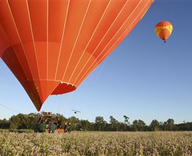 Balloons Over Brisbane Image