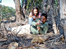 Australian Wildlife Walkabouts Image