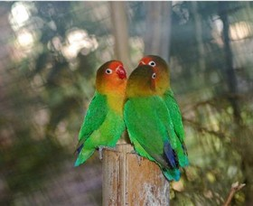 Ballarat Bird World Image