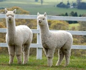 Alpaca Products Australia Image