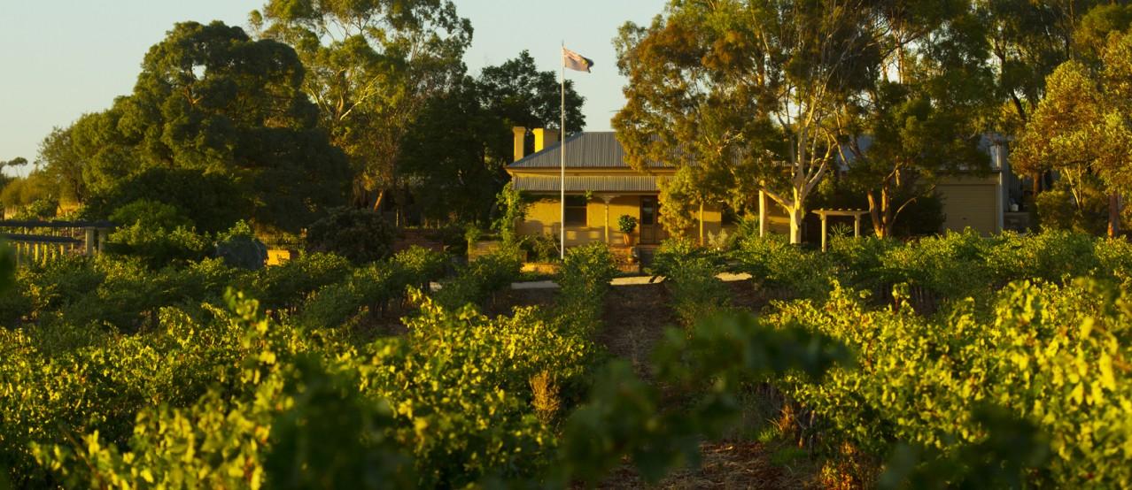 Greenock Creek Vineyard And Cellars Image