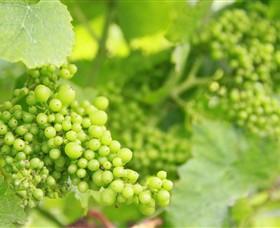 Waratah Hills Vineyard Image