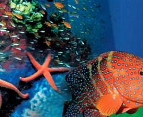 Indo Pacific Marine Image