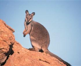 Wallaby Gap Image