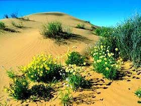 Simpson Desert National Park Image