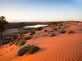 Simpson Desert Conservation Park and Regional Reserve Image