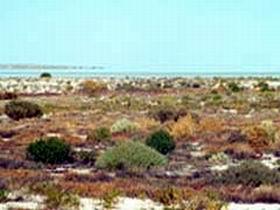 Kati Thanda-Lake Eyre National Park Image