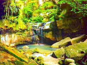 Carnarvon Gorge, Carnarvon National Park Image