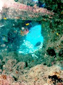 Michaelmas Cay Dive Site Image