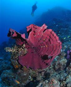 Steve's Bommie Dive Site Image