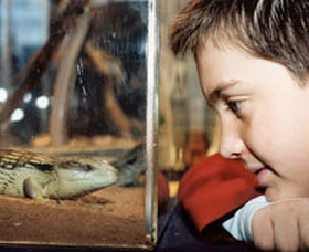 Canberra Reptile Zoo Image