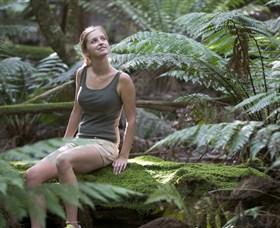 Barrington Tops National Park - Honeysuckle Forest Track Image