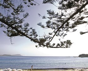 Terrigal Beach Image