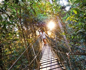 Tree Top Walkway Image