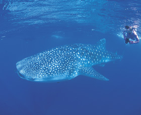 Ningaloo Reef Image
