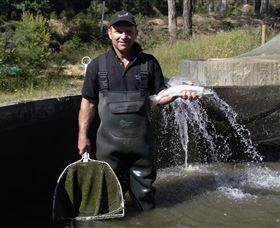 41 Degrees South Salmon Farm and Ginseng Farm Image