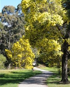 Wattle Park Image