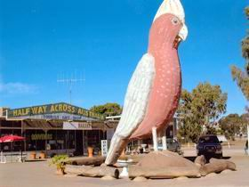 The Big Galah Image