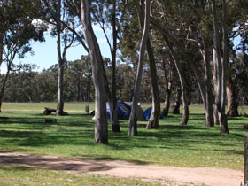 Black Cockatoo Bush Camp Image