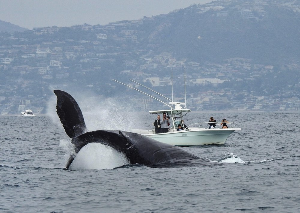 East Meets West Excursions Whale Watching