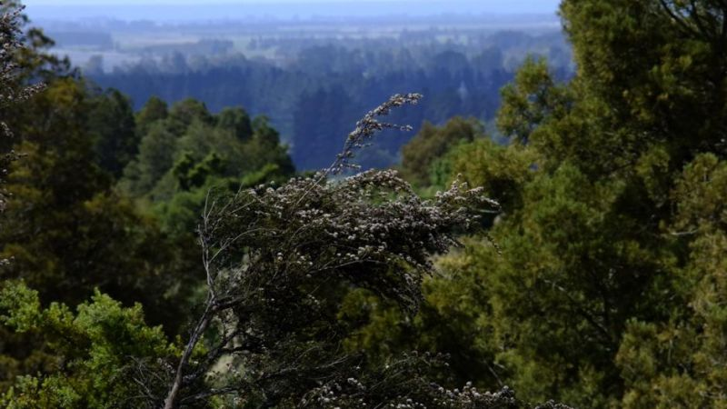 The Lookout Peel Forest