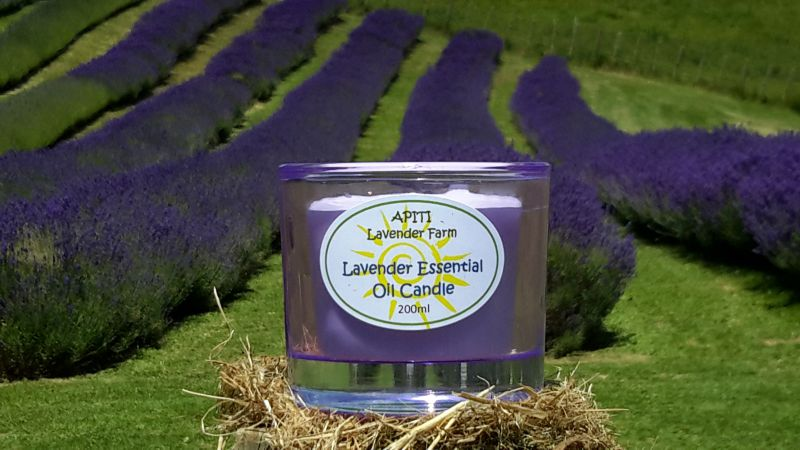 Apiti lavender farm