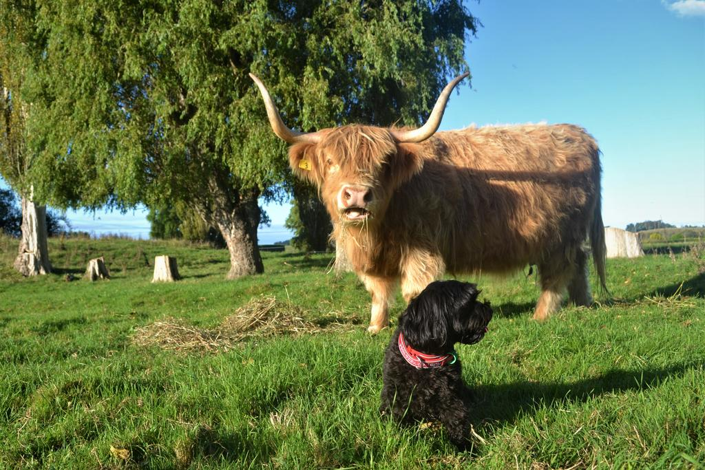 Highlands on Homestead