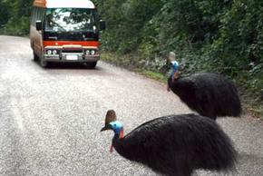 Kookaburra Tours