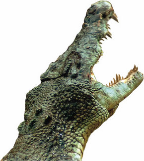 Crocodylus Park Logo and Images