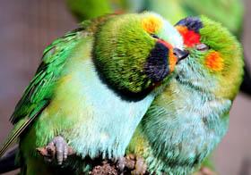 Rainbow Jungle - The Australian Parrot Breeding Centre Logo and Images