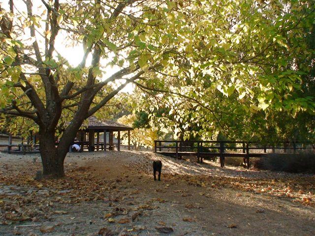 Golden Valley Tree Park