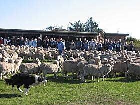 Curringa Farm - Accommodation and Farm Tours