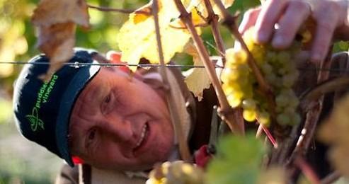 Puddleduck Vineyard
