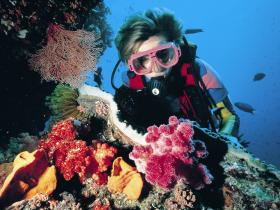 Nine Mile Reef Dive Site Logo and Images