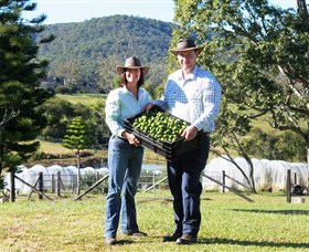 Hinterland Feijoas Logo and Images