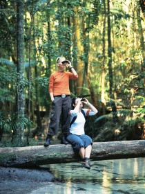 Birdwatching on the Fraser Coast Image
