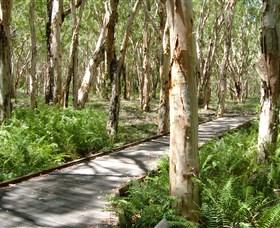 The Kommo Toera Trail