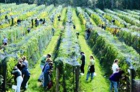 Crosswinds Vineyard