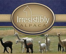 Marchmont Park Alpacas Image