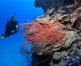 Three Sisters Dive Site