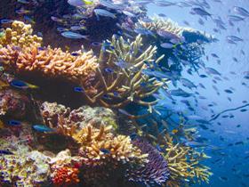 Fairey Reef
