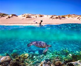 Snorkel the Ningaloo Reef Logo and Images