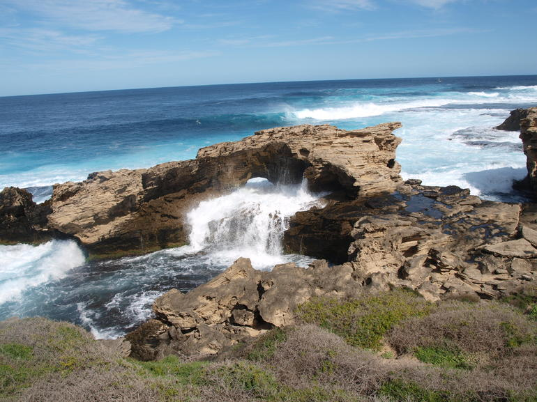 Rottnest Island Tour from Perth or Fremantle Logo and Images