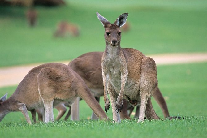 Full-Day Perth, Fremantle, Swan Valley & Wildlife Park Logo and Images